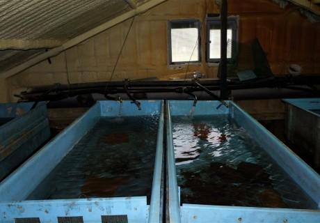 Actuacions per a la conservació del cavilat i la truita a la conca de la Garona