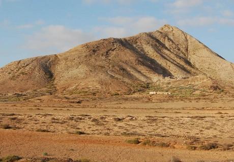 Fauna y flora para los estudios previos para la declaración de un Parque Nacional de zonas áridas en Fuerteventura