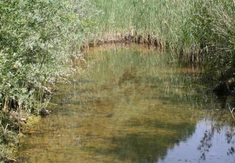 Caracterització de la ictiofauna i l'estat ecològic del riu Cueza en el marc del projecte de regulació addicional del riu Carrión (Palencia)