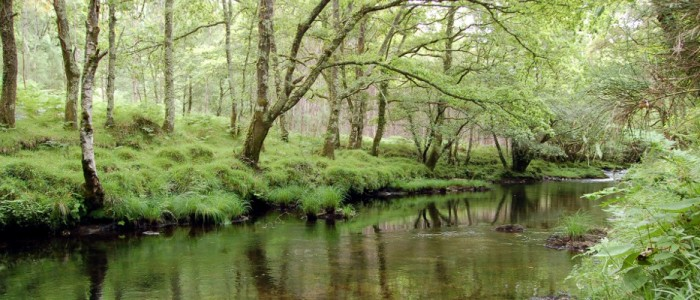 Jornadas Eume y el Lago. Control d'ictiofauna al riu Eume